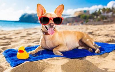 Cães e gatos precisam de cuidados na praia